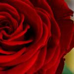 Amarres de amor con poción de amor