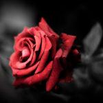 Hechizos de Amor Fácil para el amor